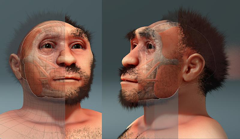 Homo erectus pekinensis, forensic facial reconstruction.png