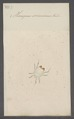 Homopus - Print - Iconographia Zoologica - Special Collections University of Amsterdam - UBAINV0274 073 01 0020.tif