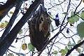 Honeycombs by country Bienenwaben Styria 03.jpg