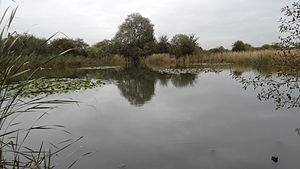 The Chase Nature Reserve - Hooks Hall Pond