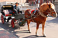 Horse & carriage Tour, Concessions area, Tianjin.jpg
