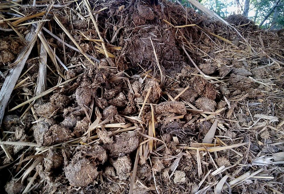 Horse Manure and Hay Detritus
