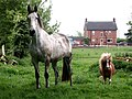 Horse and pony - geograph.org.uk - 432739.jpg
