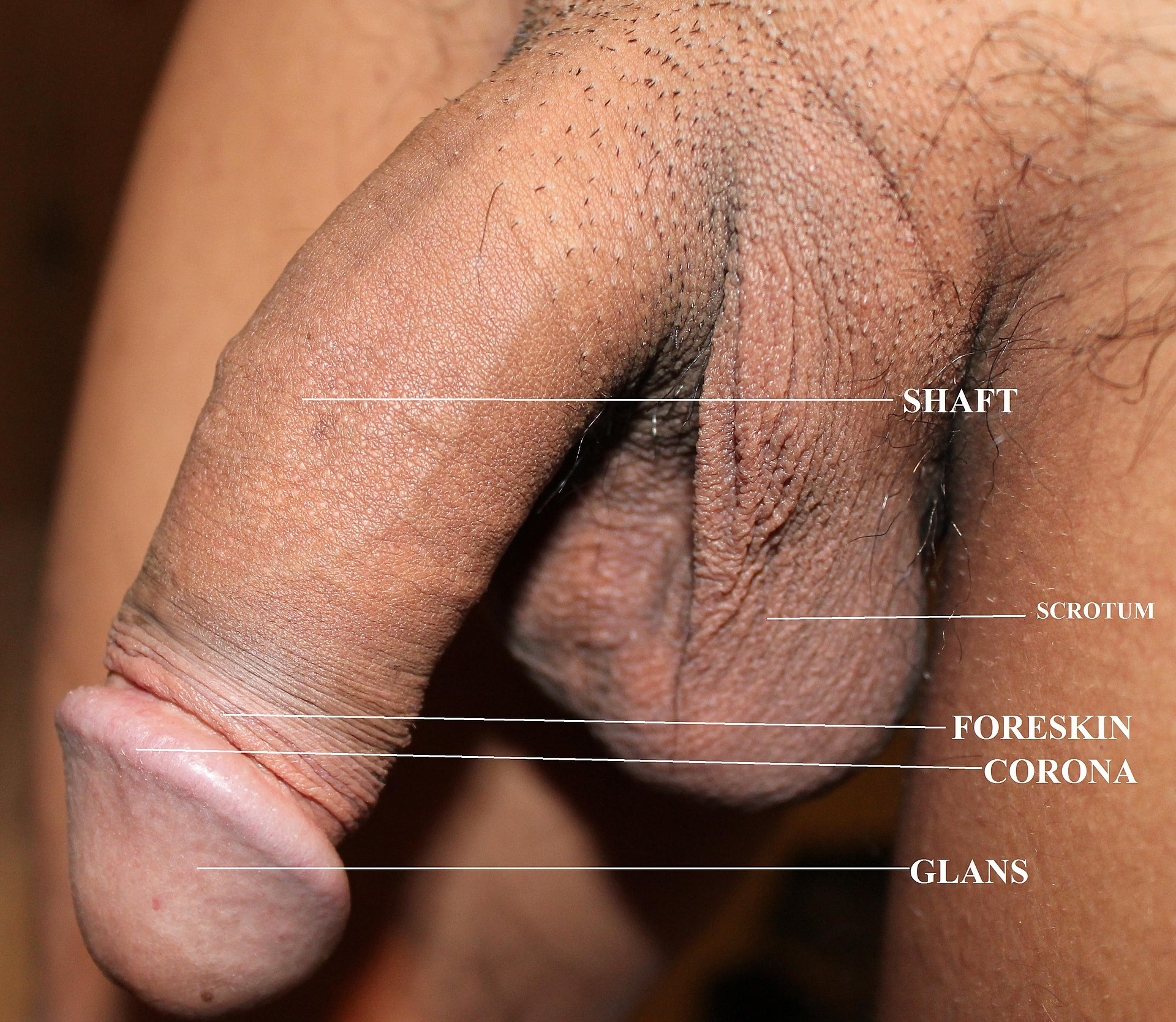 from Giovani porn pictures of a black man penis
