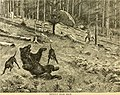 Hunting and trapping stories; a book for boys (1903) (14802407223).jpg