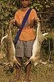 Hunting hare Lepus nigricollis MG 5312 06.jpg