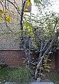 Hushang Ebtehaj's Arghavaan tree.jpg