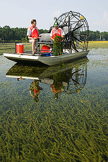 Two men with bright orange life jackets on an airboat in water with abundant plant growth visible below