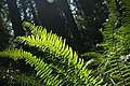 I Love Ferns (2548093120).jpg