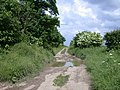 "Icknield Way ""Riders' Route"" - geograph.org.uk - 833293.jpg"