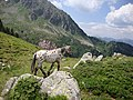 Il cavallo di pippi calzelunghe a forcella doss caligher - panoramio.jpg