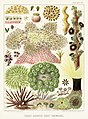 Illustration from The Great Barrier Reef of Australia (1893) by William Saville-Kent from rawpixel's own original publication 00004.jpg