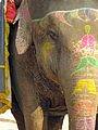 India-6597 - Flickr - archer10 (Dennis).jpg