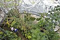 Inside the Amazon Spheres (27372362328).jpg