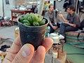 "Iran-qom-Cactus-The greenhouse of the thorn world گلخانه کاکتوس ""دنیای خار"" در روستای مبارک آباد قم- ایران 29.jpg"