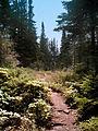 Isle Royale trail.jpg