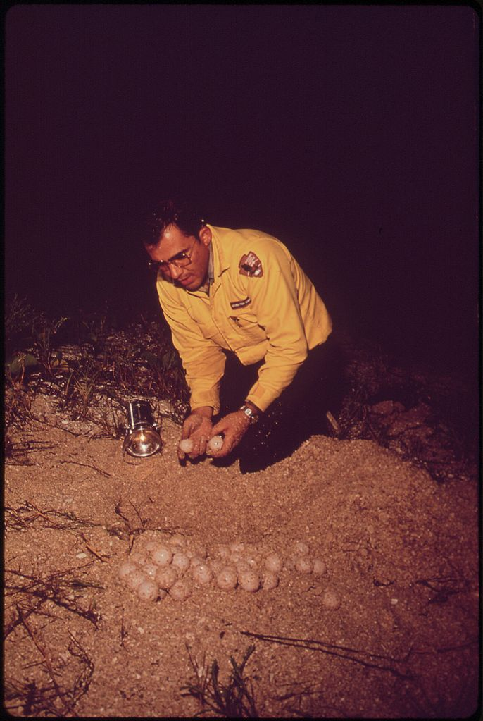 File:JIM WALTER, NATURALIST WITH EVERGLADES NATIONAL PARK COUNTS ...
