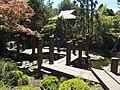 Japanese Garden Hobart Botanical 20171119-015.jpg