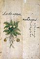 Japanese Herbal, 17th century Wellcome L0030091.jpg
