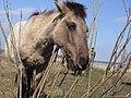 Jelgava, pils salas zirgi - panoramio.jpg