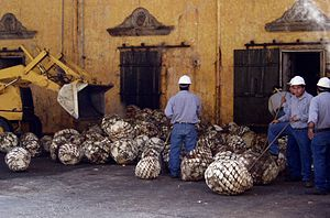 Jose Cuervo - Workers load agave hearts into ovens at the José Cuervo Distillery in Tequila, Mexico.