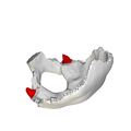 Jugular process of occipital bone - close-up04.png