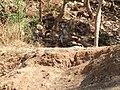 Junagah - Girnar, Gujarat - India (3417591329).jpg