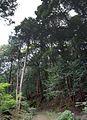 Jyoururiji Temple , 浄瑠璃寺 - panoramio (12).jpg