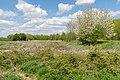 Kalletal - 2015-05-02 - LIP-013 Aberg-Herrengraben (29).jpg