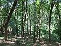 Kaniv Nature Reserve (May 2018) 14.jpg