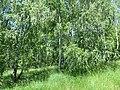Kaniv Nature Reserve (May 2018) 60.jpg