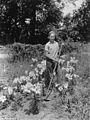 Kenneth Williams in his lily bulb patch (4204041346).jpg