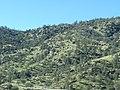 Kern County, CA, USA - panoramio (64).jpg