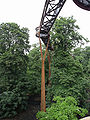 Kew Gardens tree walk 657s.jpg
