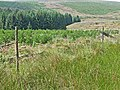 Kielder Forest - valley of the Neate Burn - geograph.org.uk - 209161.jpg