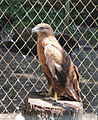 Kiev Zoo2.jpg