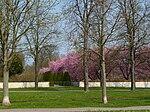 Kirschblüte im Schwetzinger Schloßgarten.JPG