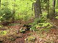 Kleť (přírodní rezervace), studánka.jpg