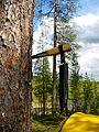Knife stuck into a pine tree.jpg