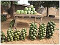 Koni and watermelon.jpg
