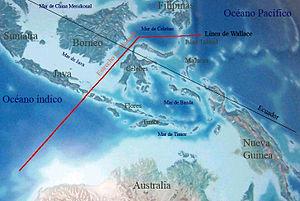 L�nea imaginaria de separación entre el Sureste Asiático y Australasia.