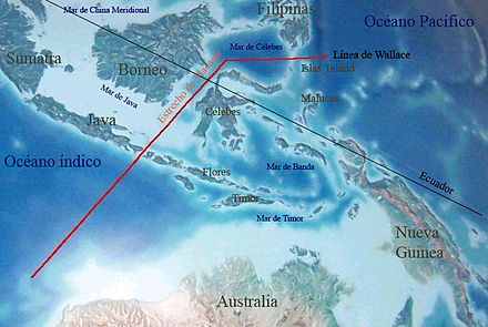 Wallace Line separates Australasian and Southeast Asian fauna. Linea de Wallace.jpg