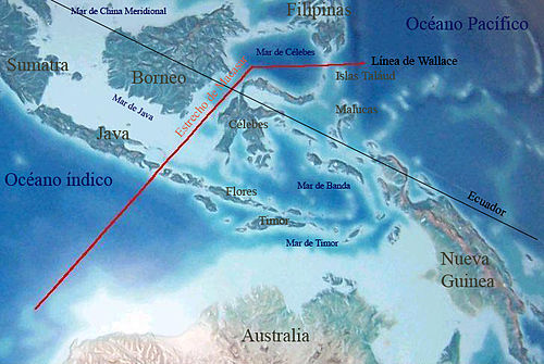 Wallace's Line; Bali and Lombok, unmarked, are to the south-west end