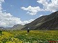 LAR عکس از گشتاکلوب -دشت لار مقابل چشمه دوبرار - panoramio.jpg