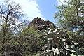 La Palma - El Paso - Calle Coromoto - El Paso pyramid 01 ies.jpg