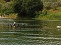 Lake Kerkini 3.jpg