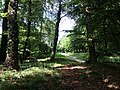 Landschaftsschutzgebiet Düingdorfer Berg Datei 16.jpg