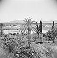 Landschap in de omgeving van Jericho. De vlakte van de Dode Zee, Bestanddeelnr 255-5614.jpg
