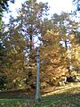 Laurelhurst Park, light, Nov. 2011.JPG