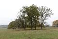 Lauterbach Frischborn Eisenbach Quercus Pastures Coarse woody debris Autumn Baronenweg E 5.png